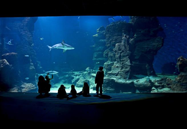Conseil dio aquatique Mare_nostrum1