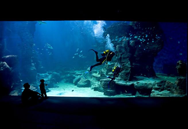 Aquarium Mare Nostrum de Montpellier - Parc attraction - Aquariums ...