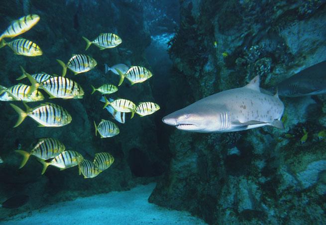 Oceanopolis Related Keywords & Suggestions - Oceanopolis Long Tail ...