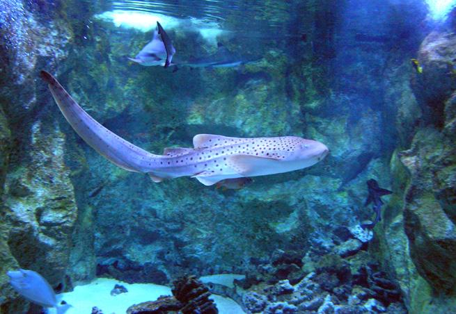 seaquarium parc attraction aquariums le grau du roi 30240. Black Bedroom Furniture Sets. Home Design Ideas