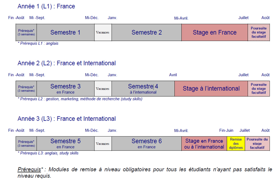 Le Bachelor International // Contenu et Organisation