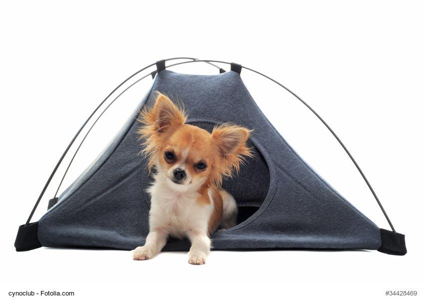 Kit vacances comment faire pour partir avec son chien au - Comment faire partir des moucherons dans une cuisine ...