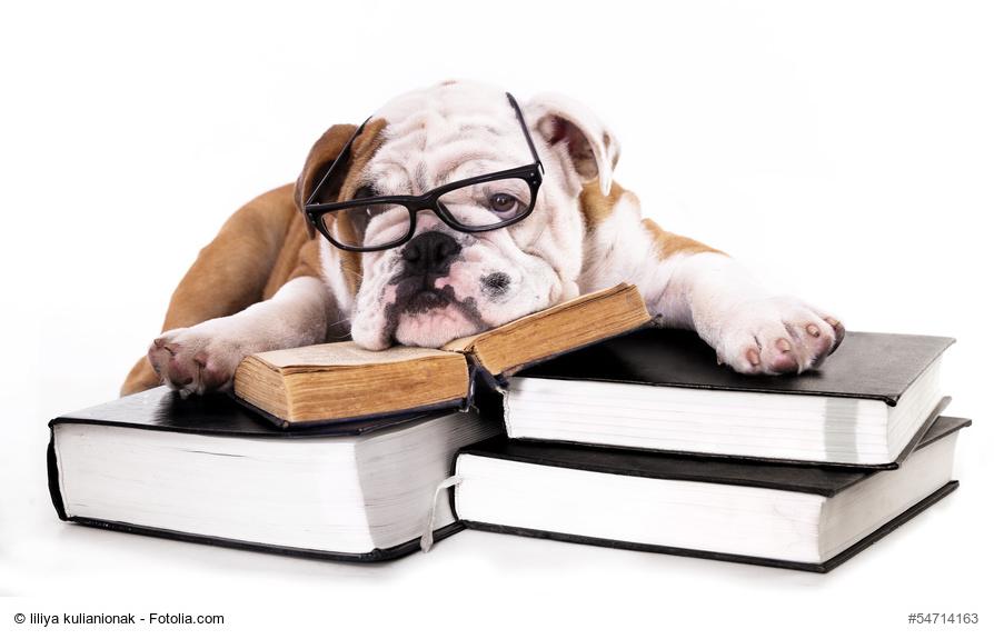 Peut-on adopter un chien en étant étudiant ?